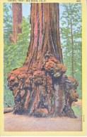 U.S.  ANIMAL  TREE   BIG  BASIN,   CALIF. COAST   Used    1949 - USA National Parks