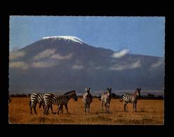 ANIMAUX - ZEBRES - Kilimanjaro - Zèbres
