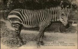 ANIMAUX - ZEBRES - Zoo - PARIS - Zèbres