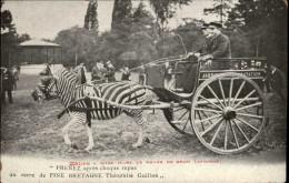 ANIMAUX - ZEBRES - Zoo - PARIS - Attelage Zèbre - Zèbres