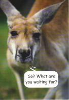 CARTE PUB - 075 /  KANGOUROU - Advertising