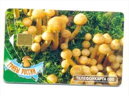 Russia MGTS Honey Agaric Mushroom - Russia