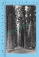 Real Photo ( Redwood Highway, 911 Laws )   POSTCARD 2 SCANS - Fleurs, Plantes & Arbres