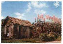 ANTILLES--Canne à Sucre (petite Animation,fillette) -cpsm 15 X 10 N° 213 éd  Antilles Touristiques - Cultures