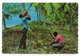 ANTILLES--Dégustation De Cocos (animée) -cpsm 15 X 10 N° 114  éd  Tropicana - Guadeloupe