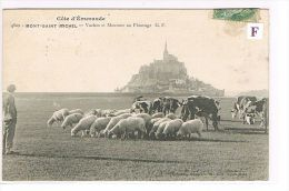 CP (50) MONT-ST-MICHEL-   Vaches & Moutons Au Paturage  - (035) - Le Mont Saint Michel