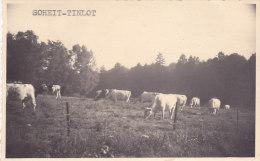 Soheit-Tinlot (vaches, Timbre 1953) - Tinlot