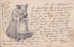 Belle CPA Illustrée COCHON  Humanisé Madame TRUIE Et Son Tablier Dentelle  Timbré 1903 - Pigs