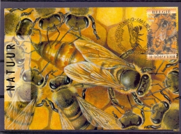 België - Lokerse Postzegelkring - Lokeren 30/8/1997   (RM8572) - Abeilles