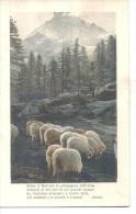 PECORE AL PASCOLO ,PIU POESIA DI  PARINI-VIAGGIATA.NO1935-FP.A1373 - Animali