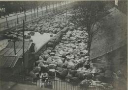 Paris Inondations De 1910 Crue De La Seine Tonneaux Vin Ancienne Photo Anonyme - Unclassified