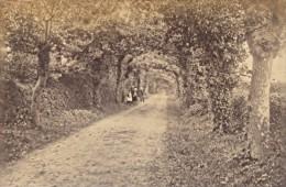 Family Promenade Jersey Island Tree Road Old Photo 1880 - Photographs