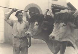 Ox Attelage Farm Worker France Old Seeberger Photo 1930 - Unclassified