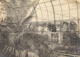 Orchid Anchorage Greenhouse Botanical USA Photo 1925 - Unclassified