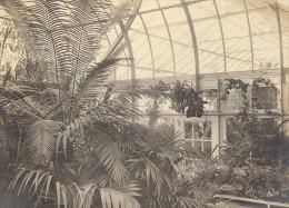 Orchid Anchorage Greenhouse Botanical USA Photo 1925 - Photos