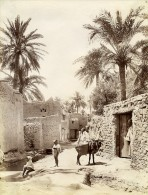 Algérie Sahara Oasis Biskra Mule Ane Ancienne Photo Neurdein 1890 - Afrique
