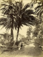 Algérie Sahara Oasis Biskra Ancienne Photo Neurdein 1890 - Afrique