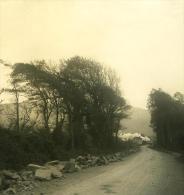 Italie Ligurie Riviera Chiavari Route De Lavagna Ancienne NPG Stereo Photo 1900 - Photos Stéréoscopiques