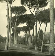 Italie Rome Villa Borghese Jardins Extérieur Ancienne NPG Stereo Photo 1900 - Stereoscopic