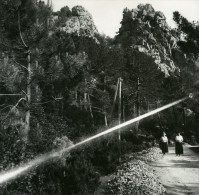 France Corse Calanques De Piana Le Maquis Ancienne Stereo Photo Amateur 1920 - Stereoscopic