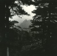 France Corse Aiguilles De Bavella Ancienne Stereo Photo Amateur 1920 - Stereoscopic