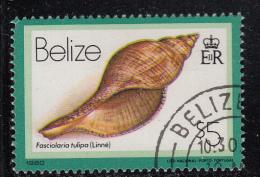 Belize Used Scott #486 $5 Fasciolaria Tulipa (Linne) - Seashells - Belize (1973-...)