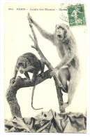 Cp, Animaux, Jardin Des Plantes, Macaques, Voyagée 1913 - Singes