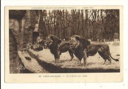 Cp, Animaux, Jardin Zoologique, Le Plateau Des Lions - Lions
