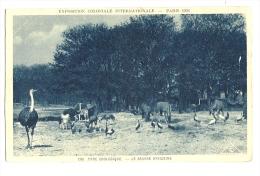 Cp, Animaux, Exposition Coloniale Internationale - Paris 1931 - Parc Zoologique, La Savane Africaine - Animaux & Faune