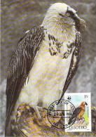 LESOTHO WWF CARTE MAXIMUM NUM.YVERT  664  PROTECTION DE LA NATURE OISEAU RAPACE GYPAETE BARBU - Cartoline Maximum