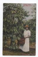 Picking Coffe.Tres Rios. C.R. - Costa Rica