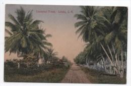 Limon. Cocoanut Trees. - Costa Rica