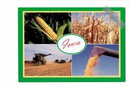 USA - Iowa - The Heartland - Moisson Moissonneuse Batteuse Tracteur Maïs - Culturas