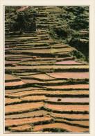 BHUTAN  VALLE DEL SANKOSH.   RISAIE    (NUOVA CON DESCRIZIONE DEL SITO SUL RETRO) - Butan