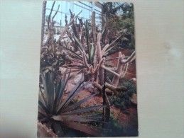Meise Nationale Plantentuin Subtropisch Amerika - Meise