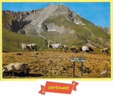 CPM Troupeau De Vaches Col Du SOULOR Mont GABIZOS TOP - Koeien