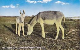 Sudan - Donkey Family - White Nile Near Khartoum Real Photo Postcard - Soudan