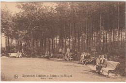 Sijsele, Sysseele, Sanatorium Elisabeth, Bosch, Bois (pk16486) - Damme