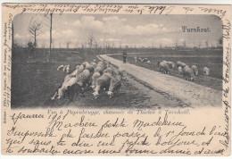 Turnhout, Vue A Papenbrugge, Chaussée De Thielen, Schaapsherder, Shepherd (pk16579) - Turnhout