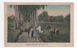 Guapiles Hacienda De La U.F.Co. - Costa Rica