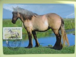 CARTE MAXIMUM CARD LE POITEVIN CHEVAL DE TRAIT  FRANCE - Horses