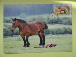 CARTE MAXIMUM CARD L'ARDENNAIS  FRANCE - Horses