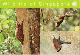 Postcard Singapore Flying Lemur, Squirrel, Bat - Animaux & Faune