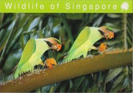 Postcard Singapore Bird Long-tailed Parakeet - Oiseaux