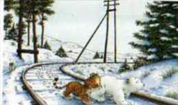 Hans DE BEER Plume Au Pays Des Tigres, Ours Blanc Et Tigre Sur Voie Ferree - Künstlerkarten
