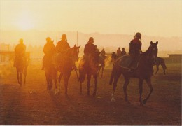 DEAUVILLE :  CHEVAUX SUR LA PLAGE - Pferde