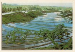 INDONESIA  BALI:  RISAIE  DI  MANSEKE       (NUOVA CON DESCRIZIONE DEL SITO SUL RETRO) - Indonesia