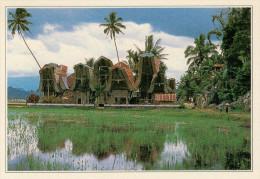 INDONESIA  CELEBES:  VILLAGGIO  TATAJA      (NUOVA CON DESCRIZIONE DEL SITO SUL RETRO) - Indonesia