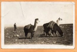 Bolivia 1910 Real Photo Postcard - Bolivie