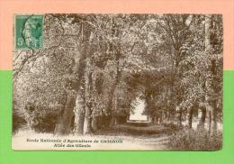 CPA  FRANCE  78  ~  THIVERVAL-GRIGNON  ~  Ecole Nle D´Agriculture De Grignon, Allée Des Tilleuls  ( En 1913 ) - France
